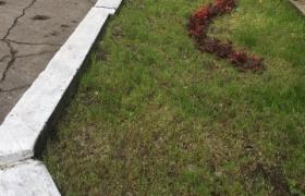 фото клумбы засеянной газонной травой