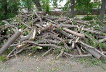 ветки деревьев после спила