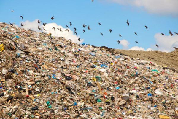 мусорный полигон фото 2